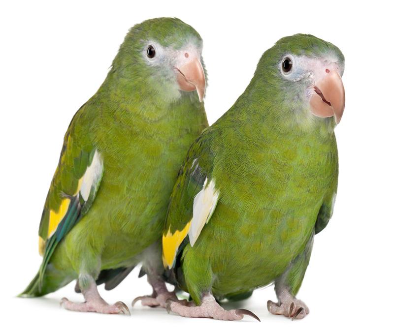 Vögel - Tierarztpraxis Völkendorf